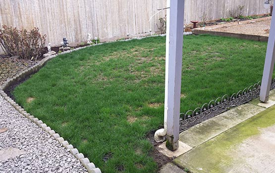 Before Synthetic Turf Lawn