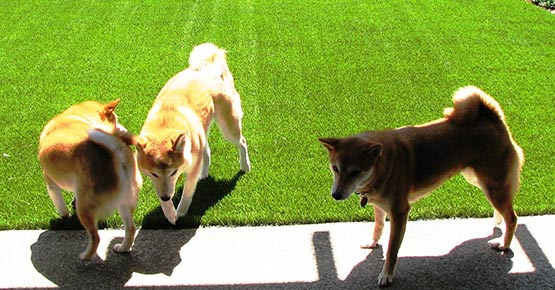 Pets Love Synthetic Turf